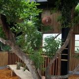 南投三天两夜私房景点-【牛耳·雕之森树屋餐厅】与树共生,与树共食