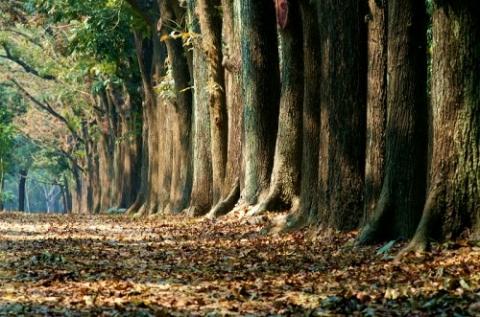 新威森林公園